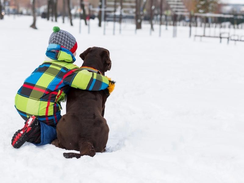 Що робити батькам, коли дитина просить собаку
